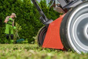 Cómo sembrar el césped paso a paso